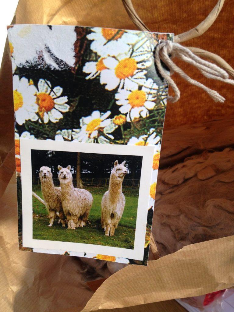 Alpaca fleece and the alpacas in a picture