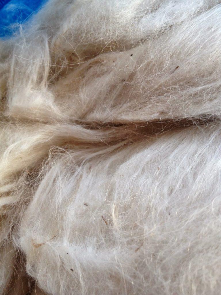 alpaca fleece carded