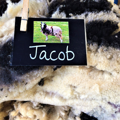 Jacob Sheep Label and Fleece