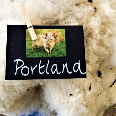 Portland Sheep Label and Fleece