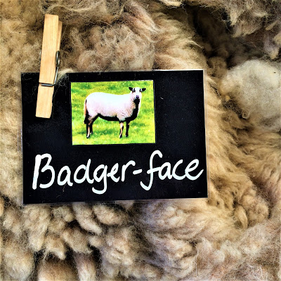 Badger-face Sheep Label and Fleece